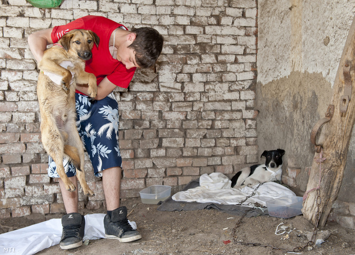Egy állatvédő kutyákat ápol egy Székkutas melletti tanyán.
