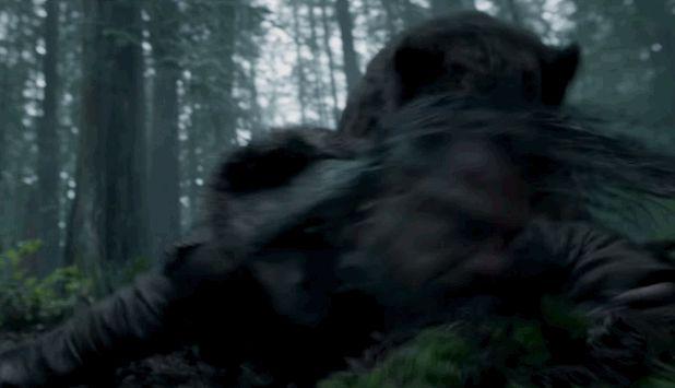 Digitális medve rángatja DiCapriót