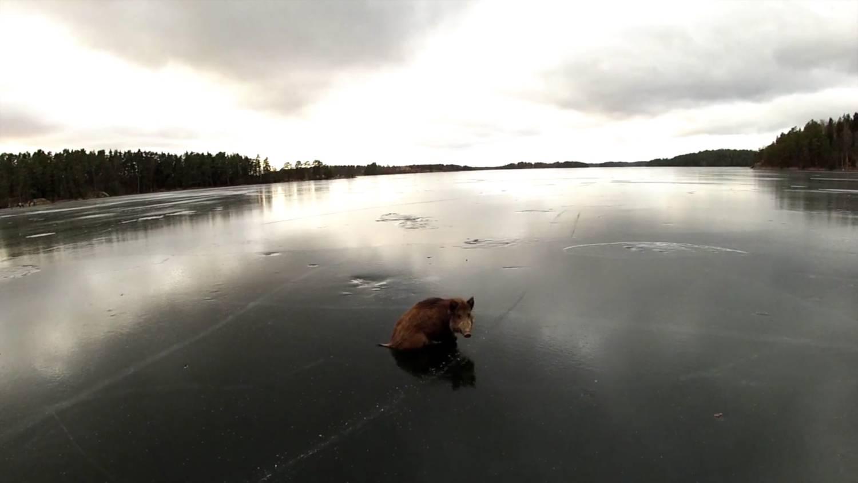 …mint malac a jégen