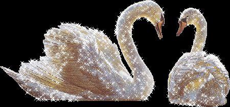 Swans.gif
