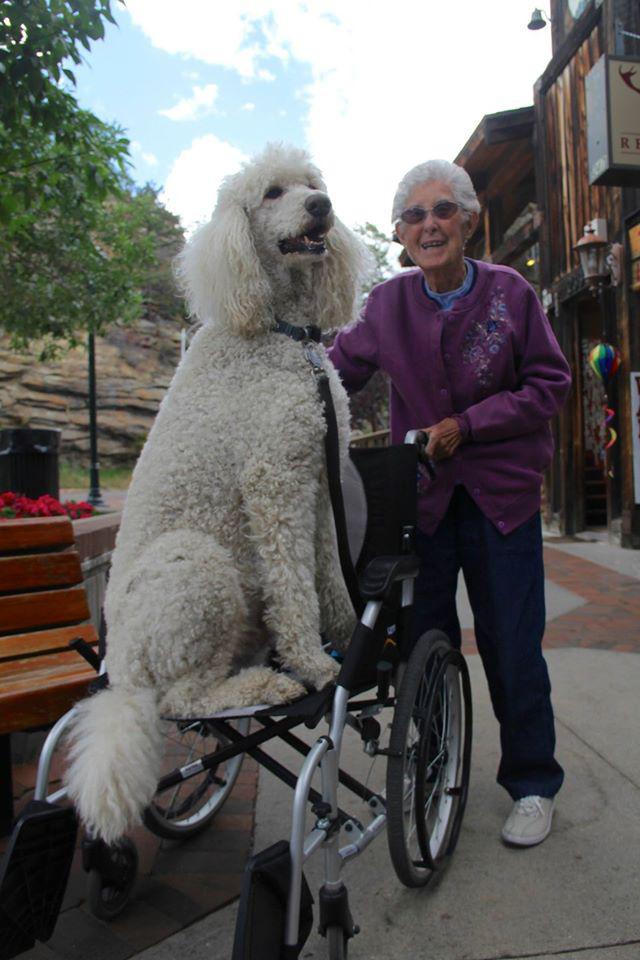 Az úton Ringo kutya is vele tart