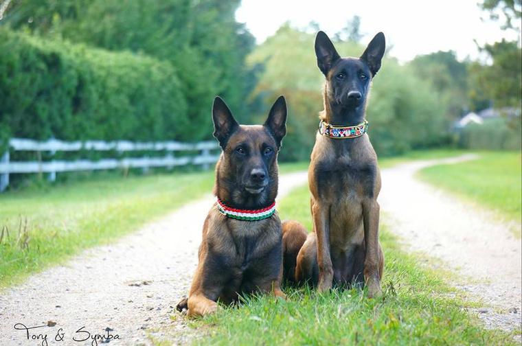 Hát nem sikerült neki! Tíz kutyából heten átmentek a vizsgán, és hivatalosan is mentőkutyák lettek.