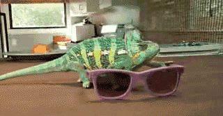 Chameleon 584500 2502604-1.gif
