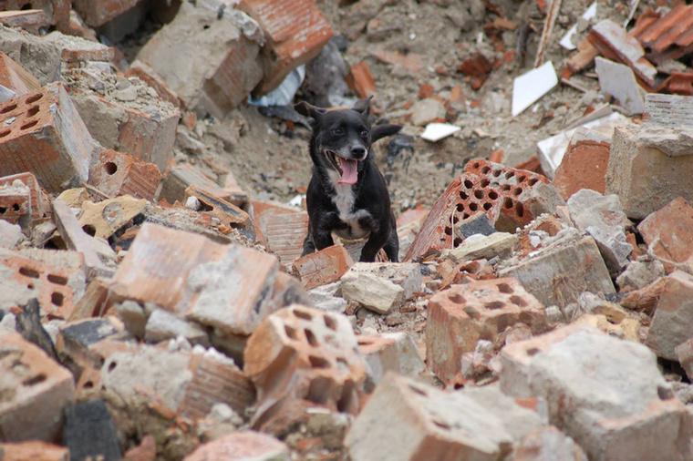 Merthogy Jolán nem egy szimpla keverék kutya, aki olykor törmelékek közé keveredik.