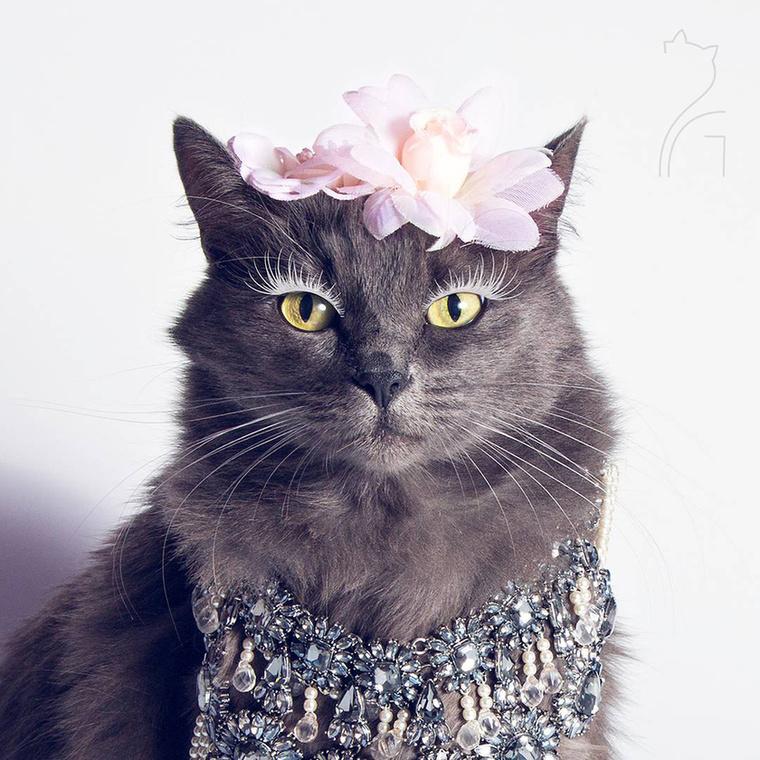 Pitzush gazdája egyébként a 35 éves Roxana Dulama, aki pár hónapos korában fogadta be a macskát