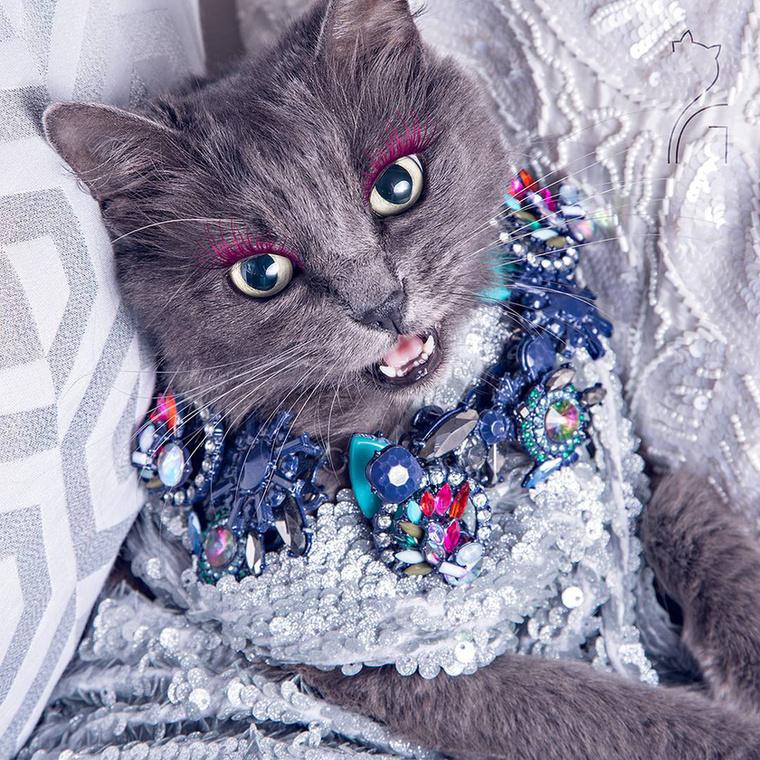 Egyébként ha még mindig azon gondolkodna, hogy hogy a francba tűri meg magán a macska a műszempillát...