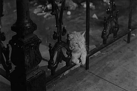 a-sad-cat-under-the-rain.gif