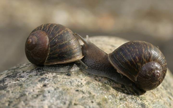 A képen jobbra Jeremy, a másik csiga személyazonossága nem ismert, és láthatóan éppen rejtőzködik is