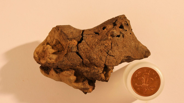 fossilized-dinosaur-brain