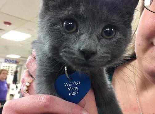 proposal-kitten-e1480780416127