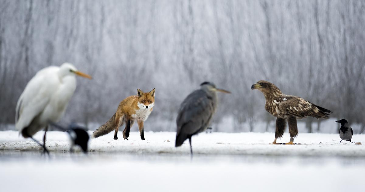 Láthatatlan történetek az állatvilágból