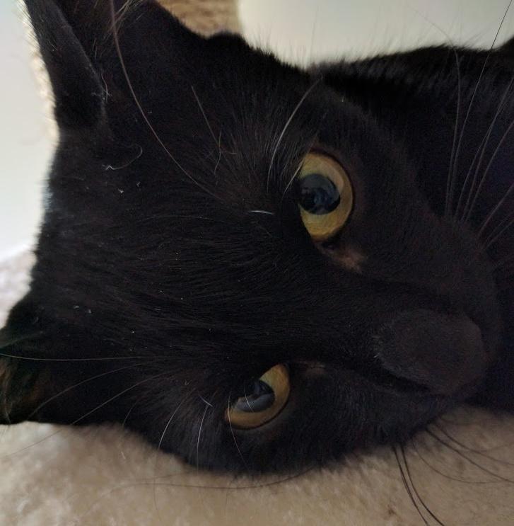 Miért uralják a macskák az internetet?