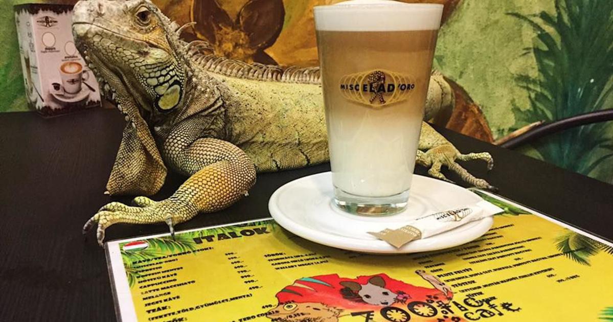 Végleg bezárják az állatkínzó budai kávézót