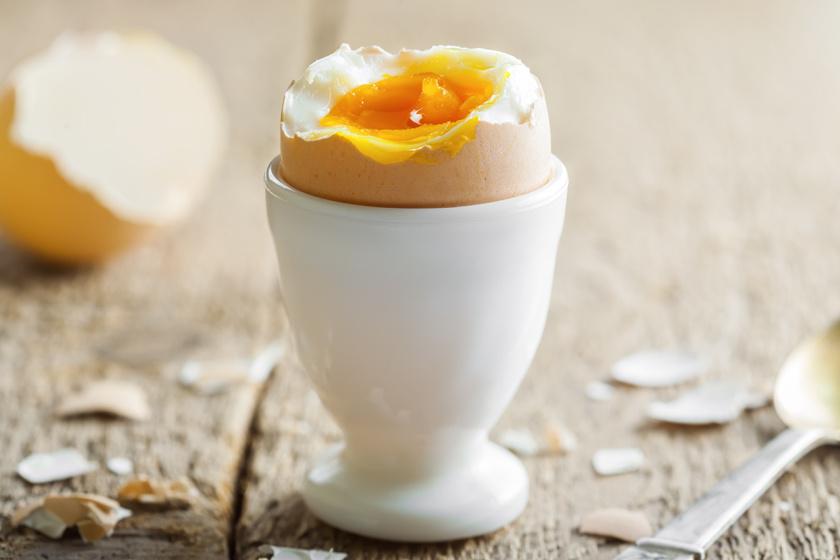 hány tojást toj a nőstény körféreg)