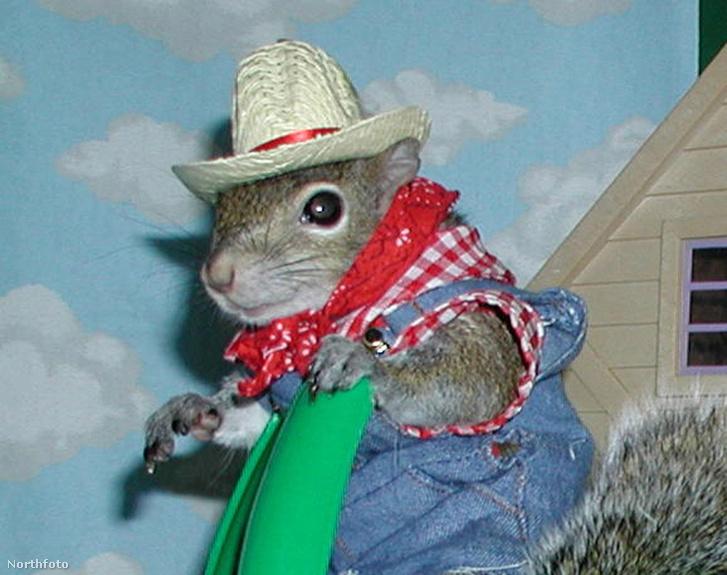 Nagyon vigyázzanak a mókusagyevéssel!