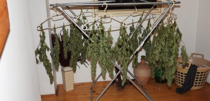 Ízléses, marihuánára épülő installációt tett közzé a rendőrség