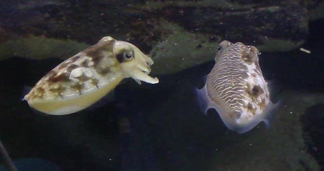 flörtöl nőstény hal