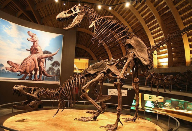 dinoszaurusz pénisz elülteti a péniszét