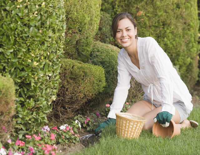 fogyás kertészkedés