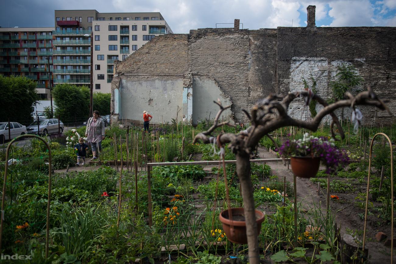 laboratóriumi kertészkedés