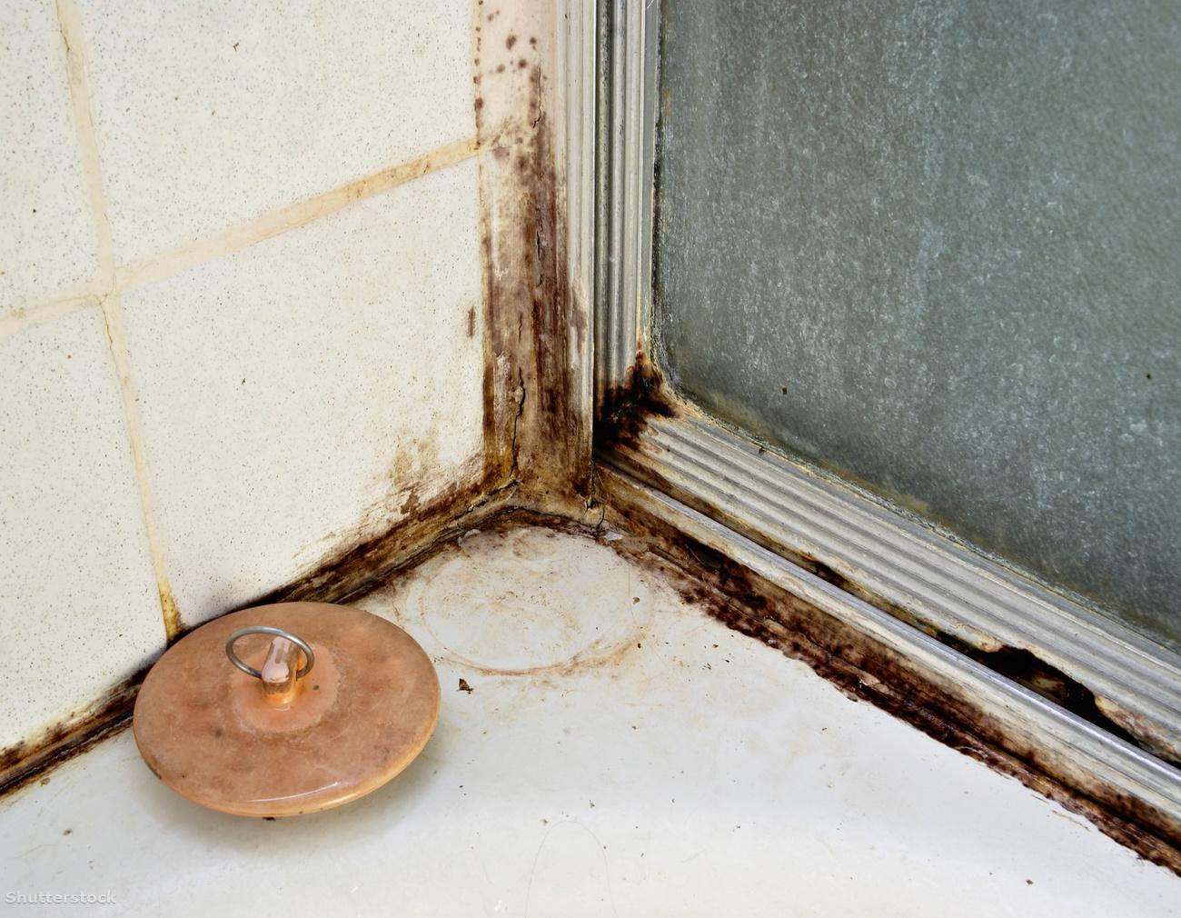 Penészes a lakása? Házi módszerek penész ellen - EgészségKalauz