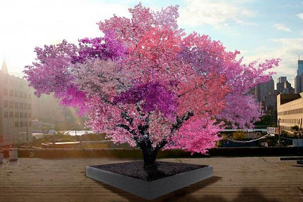 Lélegzetelállító színekben pompázik a fa
