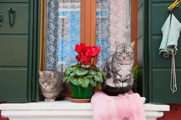 Olaszország a macskák földje