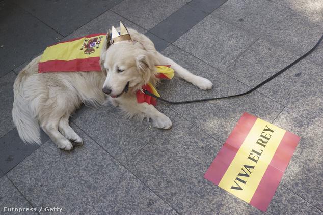 Spanyolország is inkább kutyás hely