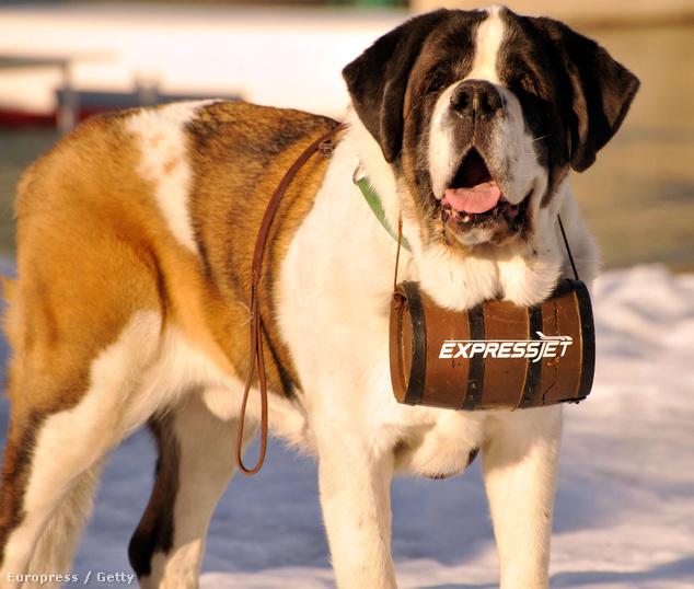 Az Alpokban bajba jutottak megmentőinek szimbóluma: a bernáthegyi kutya - illusztráció
