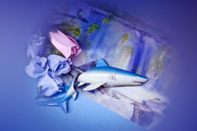 Cápa, kék rózsa.