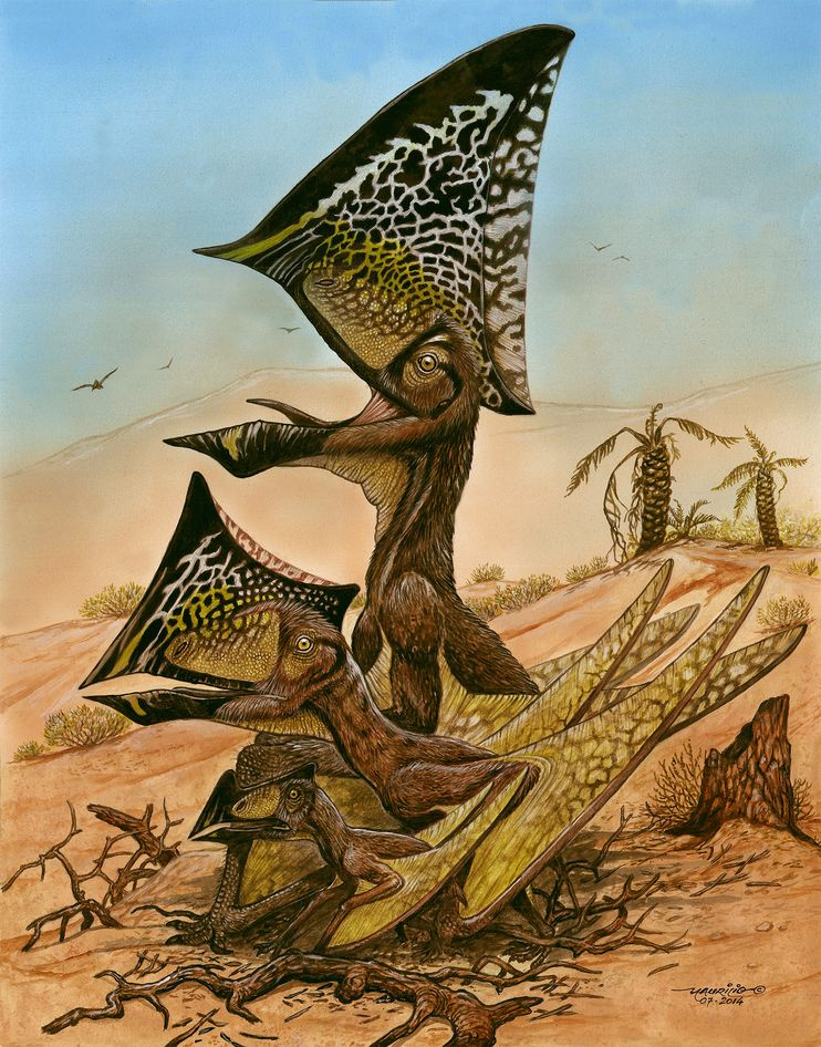 pterosaur-caiuajara-dobruskii-01 82613 990x742