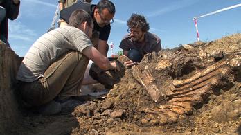 Rézkori erőd mellől került elő az új magyar mamut