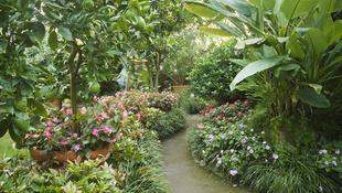 Túlélik az egzotikus gyümölcsök a kertben?