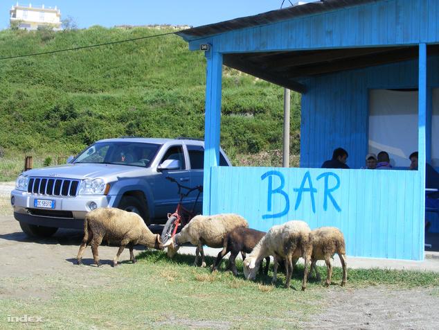 Autó, bringa, bárány