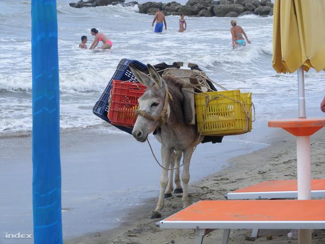 A strandon a szamarak is fokozzák az egzotikum faktort