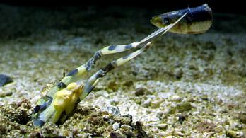 Nem lennénk halak a sáskarák közelében