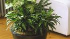 Kezdő kertészek növényei – mire figyeljen, ha növényeket szeretne vásárolni