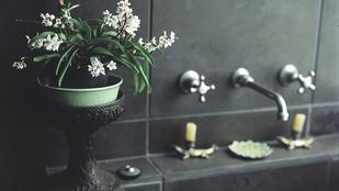 Csináljon buja őserdőt a fürdőszobából!