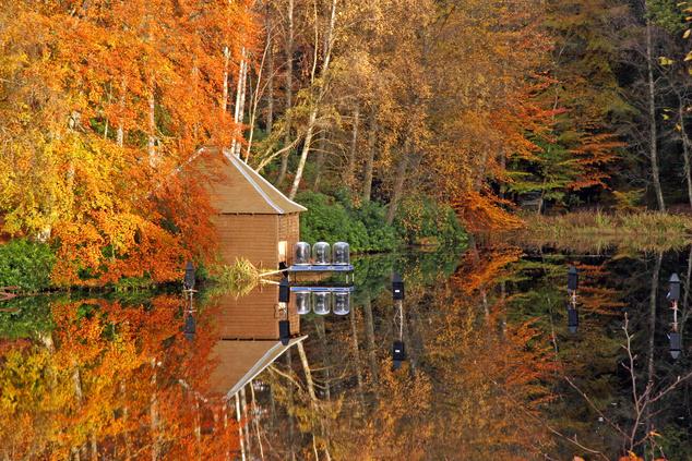 A Faskally erdő ősszel, a Loch Dunmore partján (Skócia)