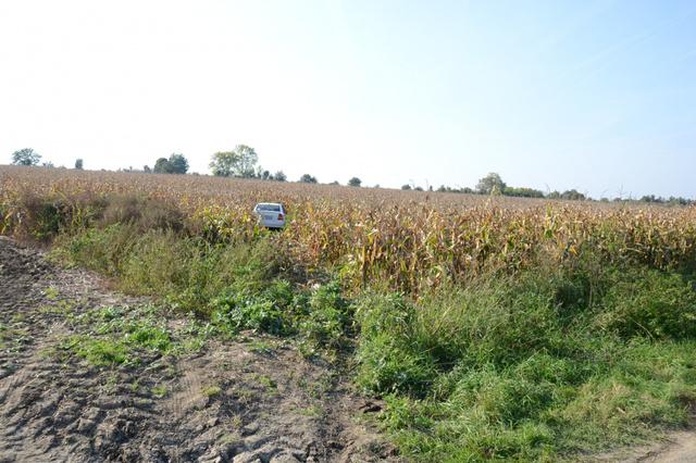 kukoricás