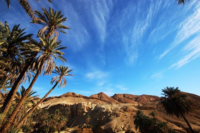 Hegyi oázis a Szaharai-Atlaszban. A hihetetlenül száraz és kopár hegység kis szurdokaiban csörgedező patakok és pálmaligetek csábítgatját az embert.
