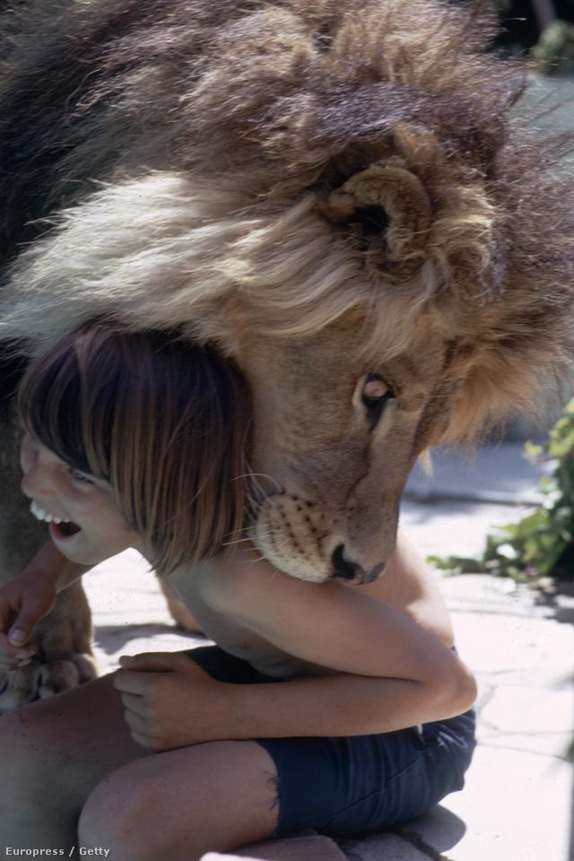 Az egyik forgatási napon Melanie Griffitht megharapta az egyik oroszlán. Összesen ötven öltéssel kellett összevarrni az arcát, és plasztikai helyreállító műtétre is szüksége volt. Tippi Hedren azt mondta, a forgatáson minden egyes családtagja megsérült, és csoda, hogy nem történt halálos baleset.