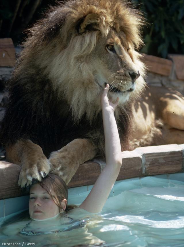 A film operatőre, Jan de Bont még rosszabbul járt, őt gyakorlatilag megskalpolta az egyik állat, 120 öltéssel tudták csak összevarrni a fejét.