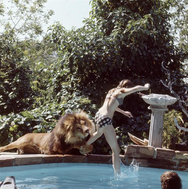 Noel Marshallt is támadás érte, olyan súlyosan megsérült, hogy csak évek alatt épült fel teljesen. A filmben elefántok is szerepeltek, Tippi Hedren leesett az egyikről, ezért eltörte a lábát, ráadásul az egyik oroszlán az ő fejét is megharapta.