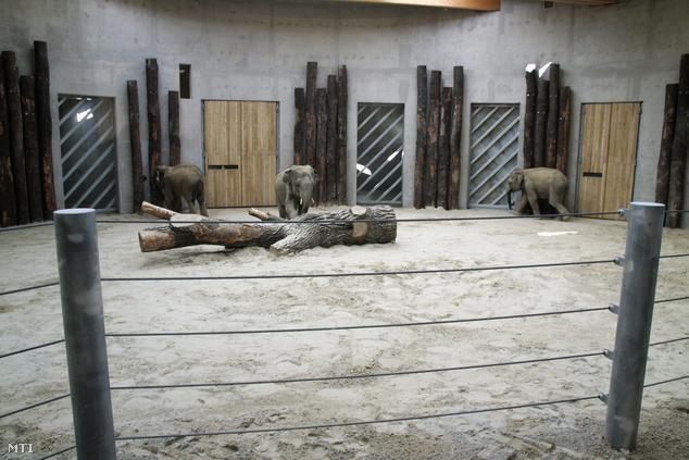 A Veszprémi Állatkert újonnan átadott elefántháza