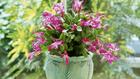 Télen is virágozhatnak növények a lakásban