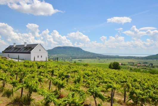 A Szent György-hegyi borászatot a Sagra Építészstúdió tervezte.
