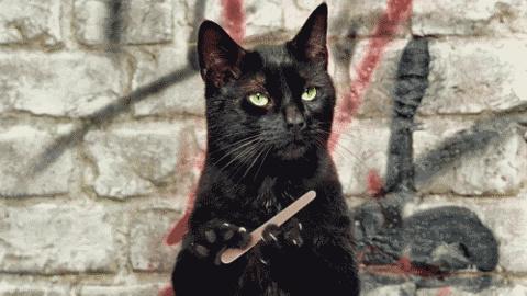 cat file.gif