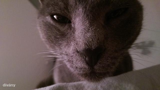 Kíváncsi macska - kevés fénnyel fotózva