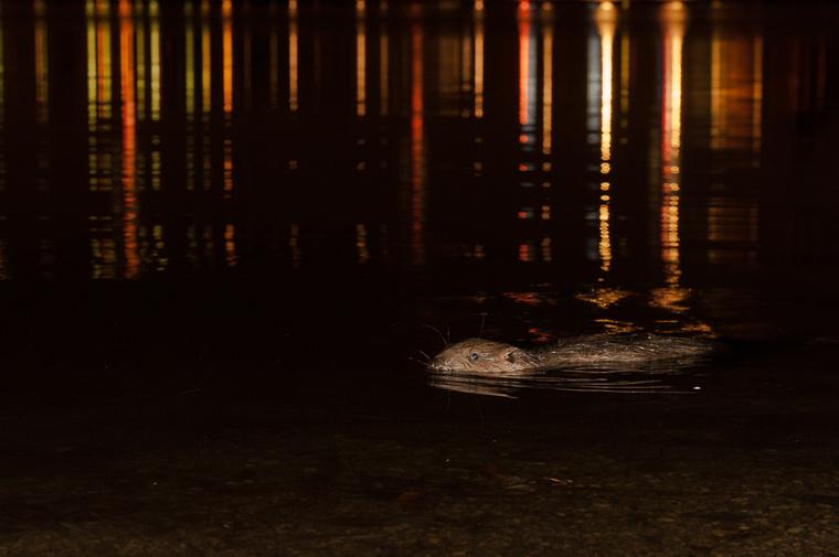 A fények az innenső partig érnek. Néha egész közel úszik a parthoz. Inger a kőhajításhoz.